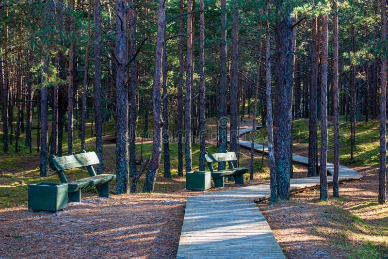 夏天太阳点燃了relaxsation的绿色森林公园 库存照片