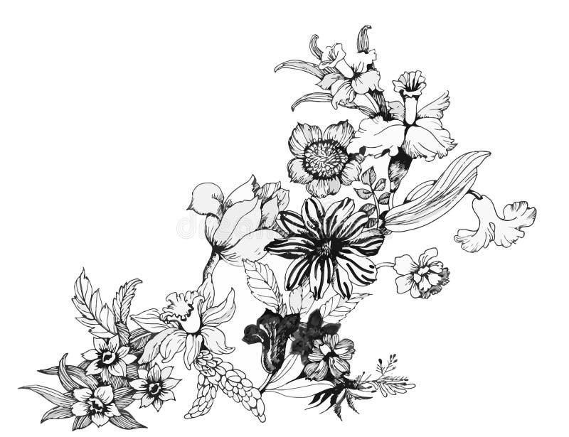 夏天庭院开花的花单色传染媒介例证 向量例证