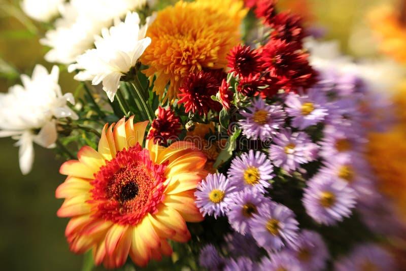 夏天庭院花花束  库存照片