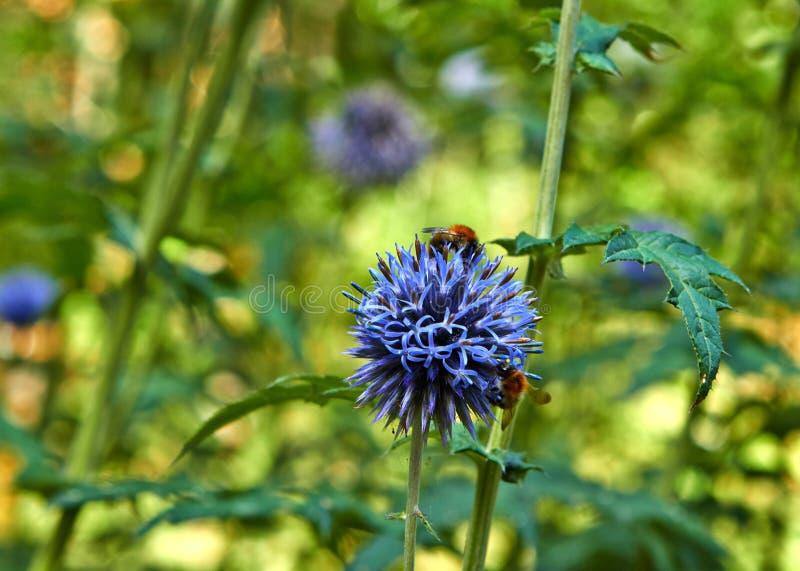夏天开花的花在阿纳姆 荷兰7月 库存图片
