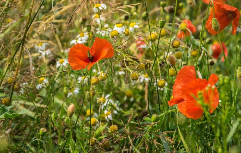 夏天开花的草甸特写镜头的片段 免版税库存照片