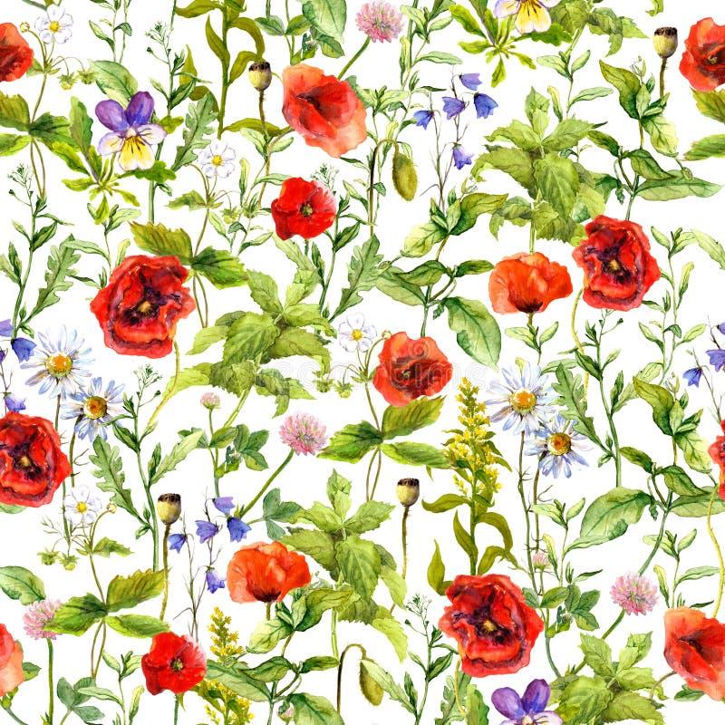 夏天开花鸦片,春黄菊,草地早熟禾 无缝的模式 水彩 免版税库存图片