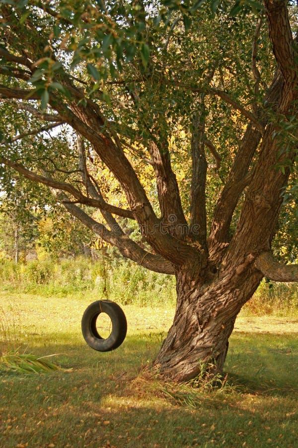 夏天摇摆轮胎 库存图片