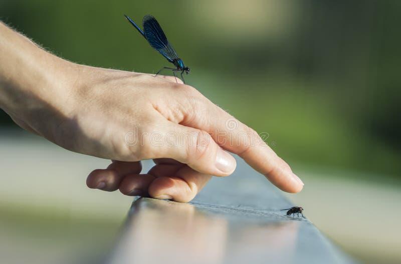 夏天昆虫巧合 免版税库存图片