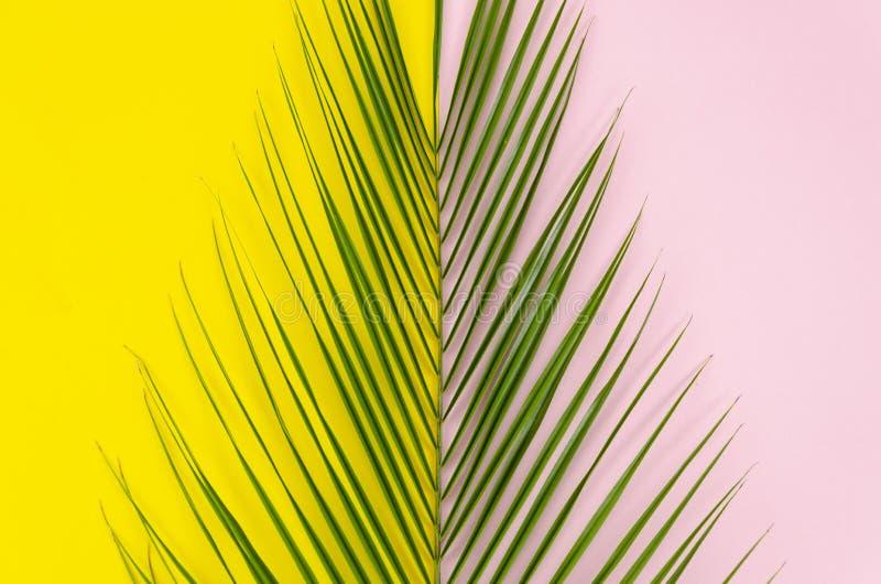 夏天是以后的流行艺术概念 在黄色和浅粉红色的背景的顶视图棕榈叶 免版税库存照片