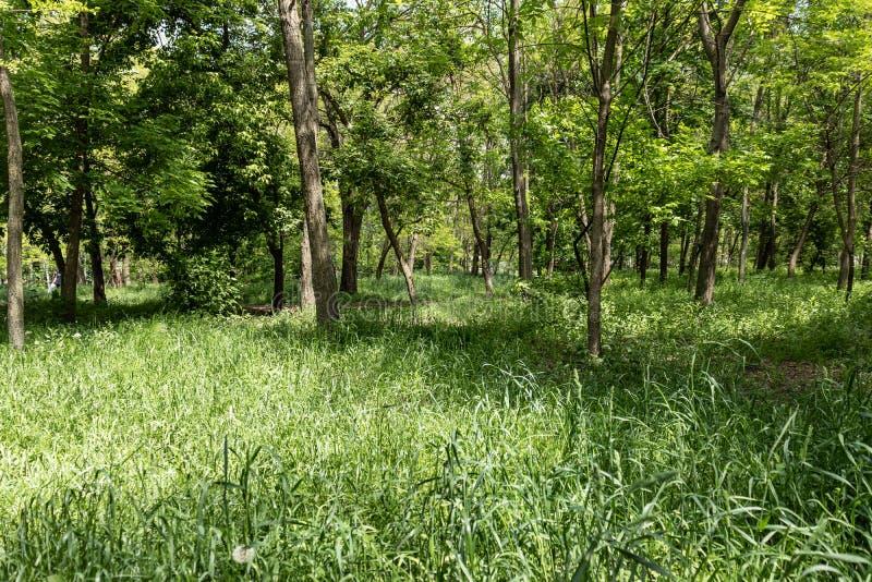 夏天树在公园 免版税图库摄影