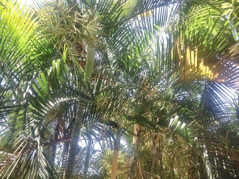 夏天棕榈树 库存照片