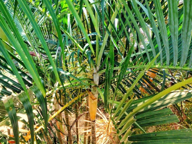 夏天棕榈树 免版税库存照片