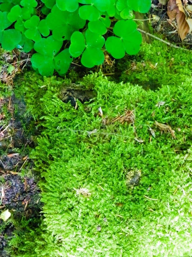 夏天森林卧具当自然背景 库存照片
