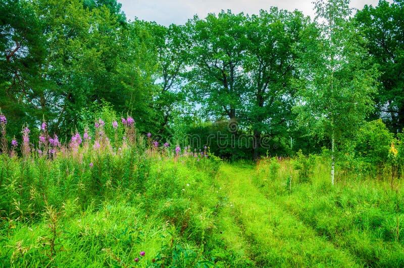 夏天森林自然美丽如画的夏天风景视图  免版税库存照片