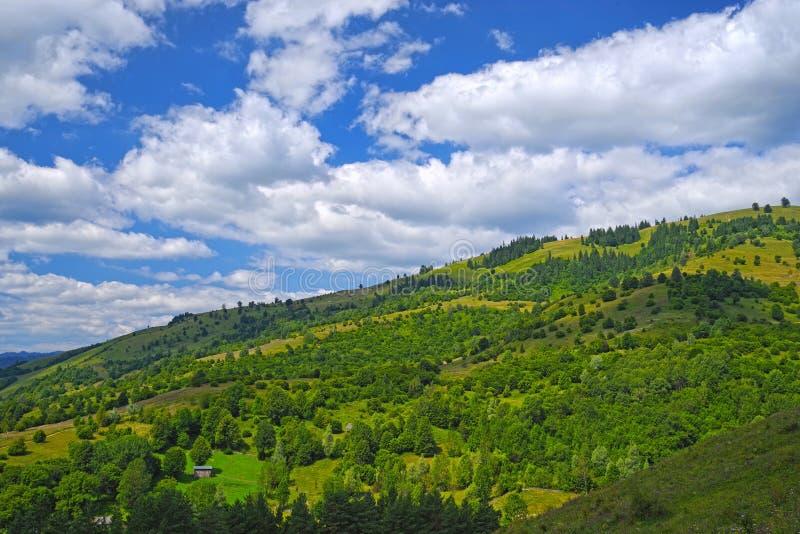 夏天森林风景、树和牧场地 免版税库存照片