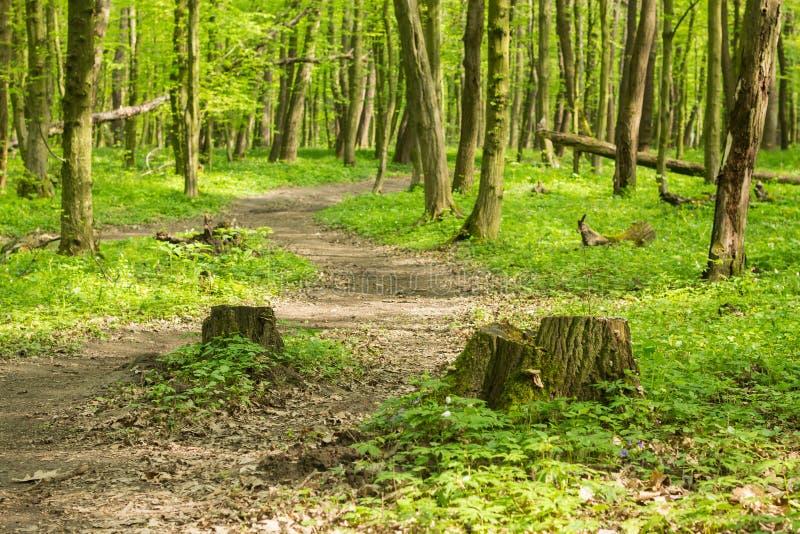 夏天森林风景 免版税图库摄影