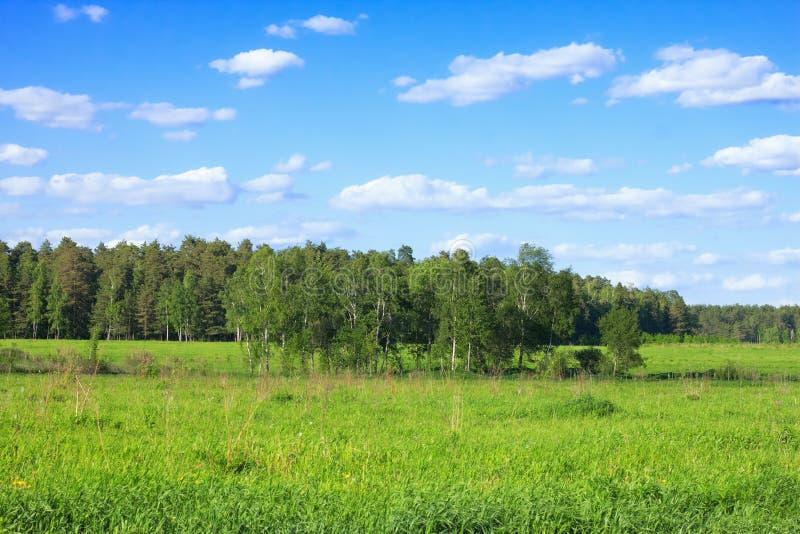 夏天森林风景 免版税库存照片