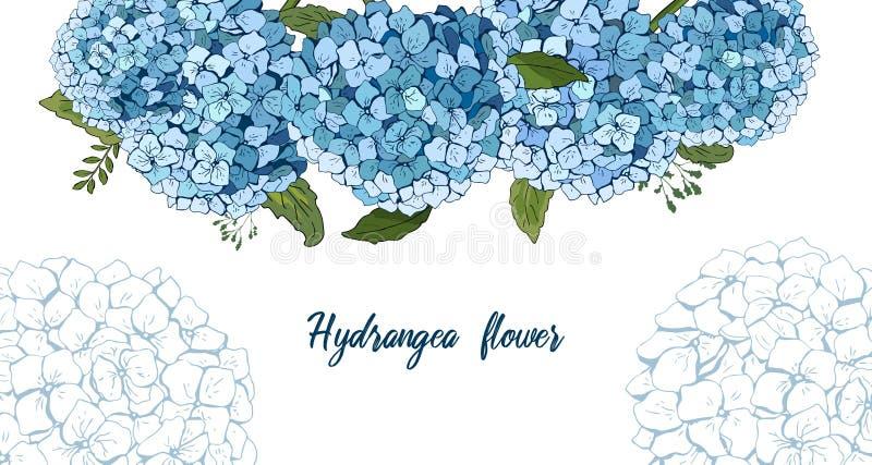 夏天植物的传染媒介设计横幅 图画递她的温暖的妇女年轻人的早晨内衣 浅兰的八仙花属 自然卡片或框架 花卉边界 所有要素 向量例证
