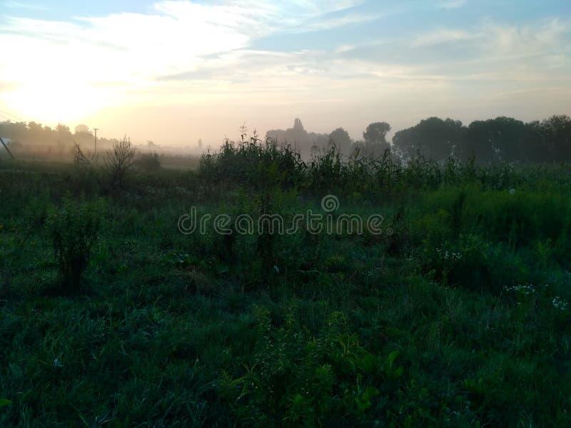 夏天横向 绿色photobackground 图库摄影