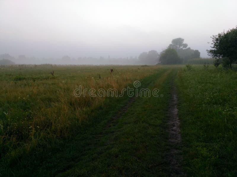 夏天横向 绿色photobackground 免版税图库摄影