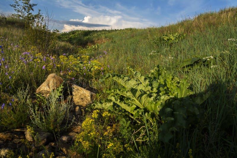 夏天横向 草甸、草和冰砾 免版税库存照片