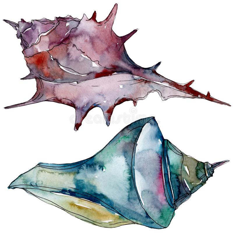 夏天海滩贝壳热带元素 r 被隔绝的壳例证元素 库存例证
