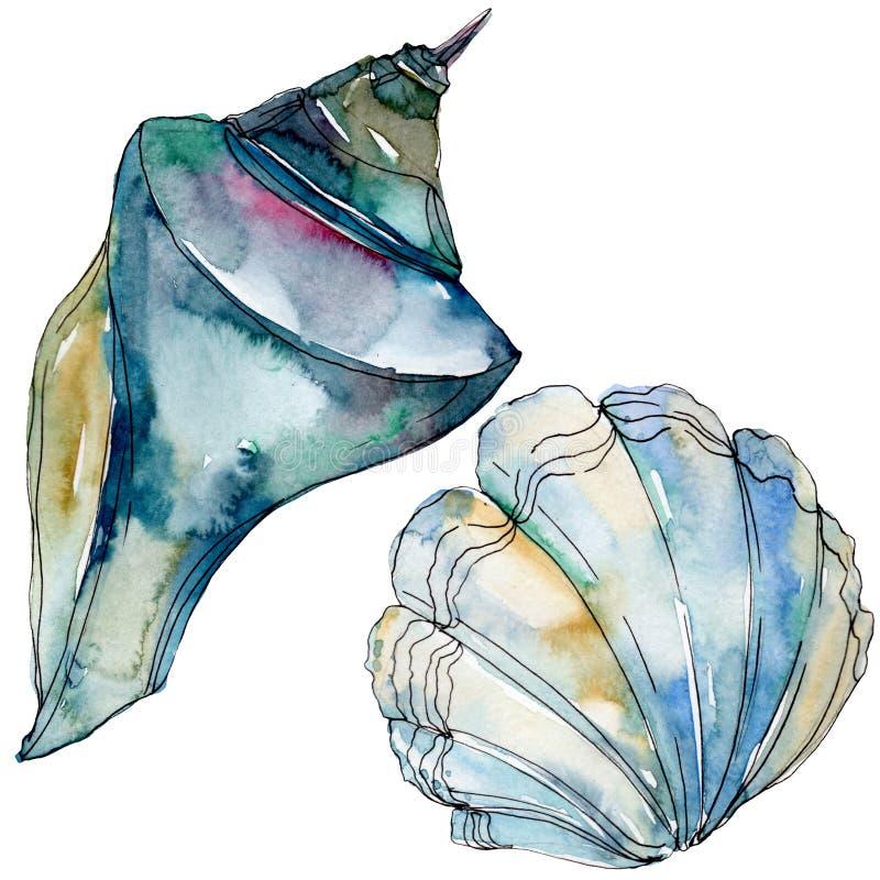 夏天海滩贝壳热带元素 r 被隔绝的壳例证元素 向量例证