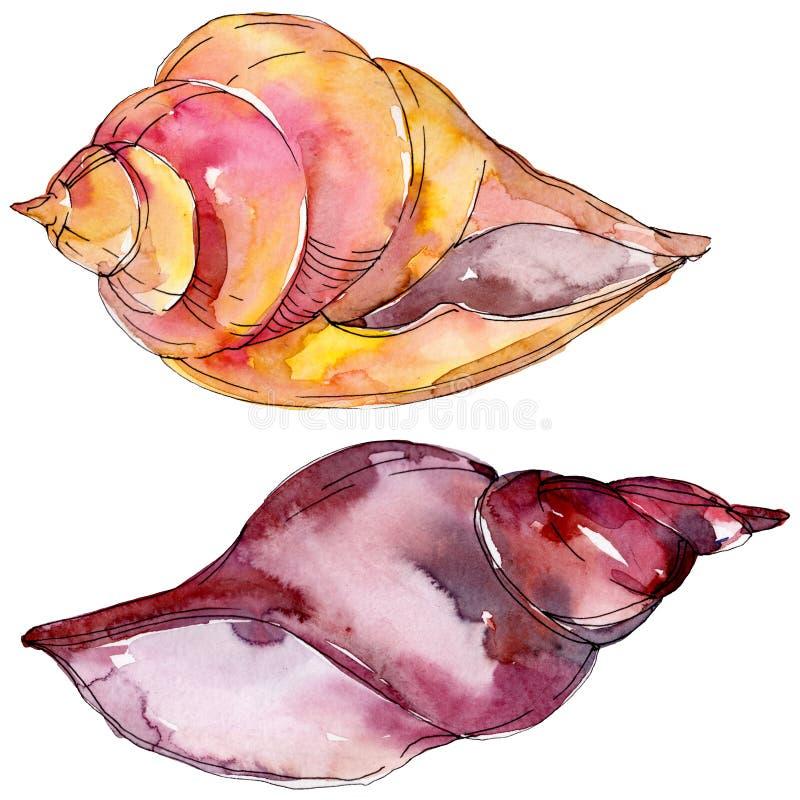 夏天海滩贝壳热带元素 r 被隔绝的壳例证元素 皇族释放例证