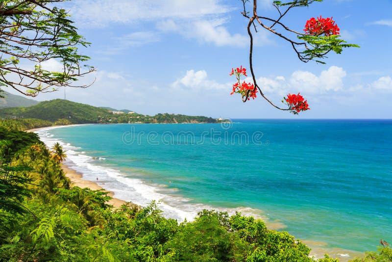 夏天海滩波多黎各 免版税图库摄影