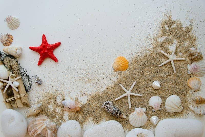 夏天海滩海概念 用不同的壳的白色背景,白色石头和沙子 红色sratfish在中心 免版税库存图片