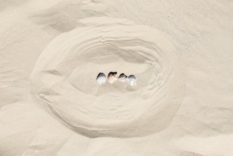 夏天海洋项目模板背景在沙子的 免版税图库摄影