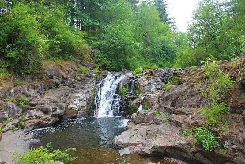 夏天瀑布在温哥华,华盛顿 库存图片