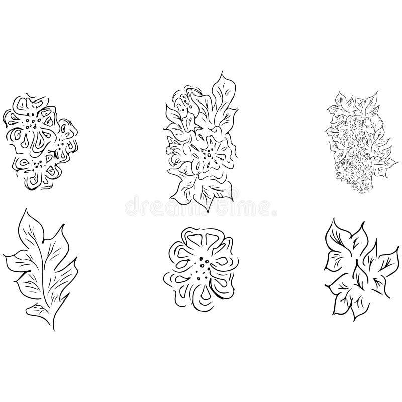 夏天热带套叶子 花卉植物的花收藏 手拉的传染媒介集合 等高剪影 热带叶子棕榈象 皇族释放例证