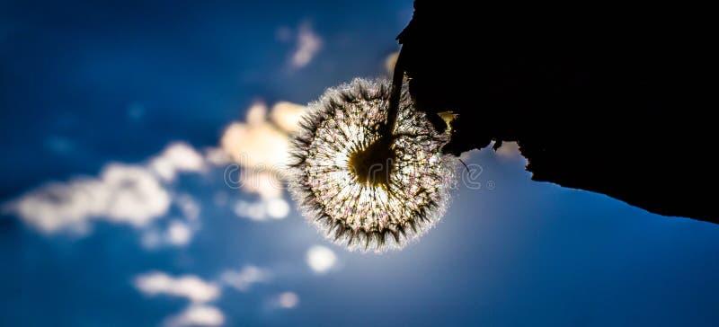 夏天的结尾,反对天空的一朵花 库存照片