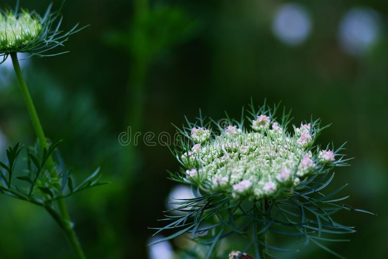 夏天的花和草甸的植物,本质,领域和森林、秀丽和变化 库存照片