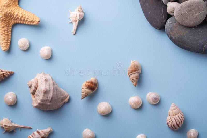 夏天纹理海星贝壳小卵石顶视图蓝色背景 免版税库存照片