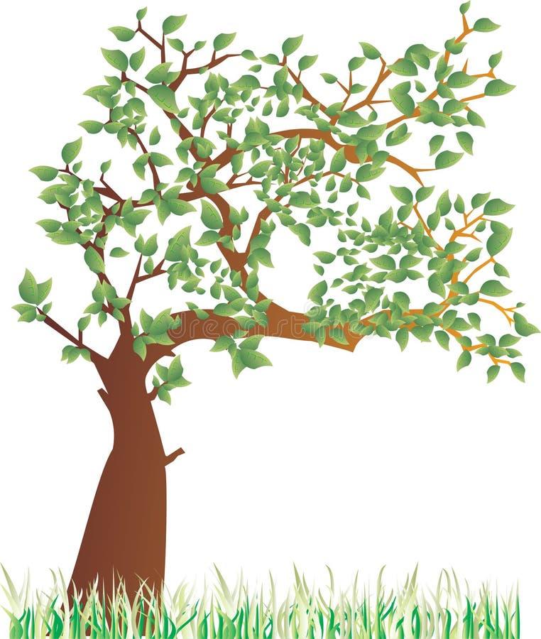 夏天结构树 库存例证