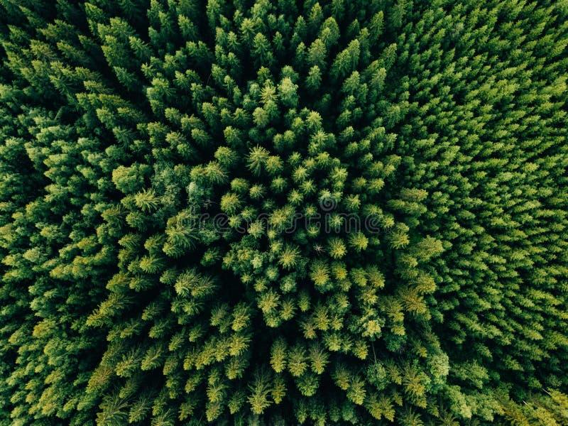 夏天绿色树空中顶视图在森林里在农村芬兰 免版税库存照片