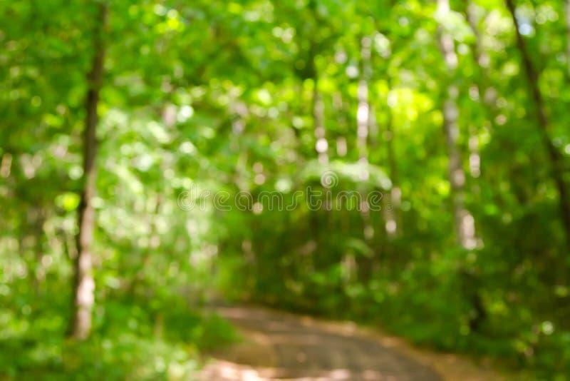 夏天绿色森林和道路焦点 库存图片