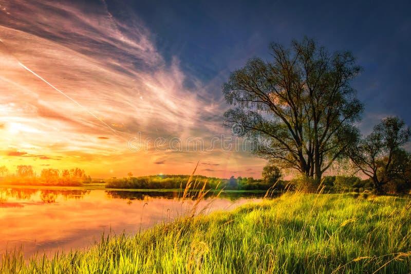 夏天自然惊人的风景在河岸的在与五颜六色的多云天空的日落 完善的在象草的银行的场面大树 库存照片