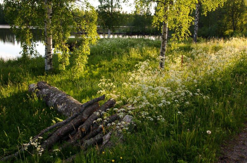 夏天芬兰晚上 免版税库存图片