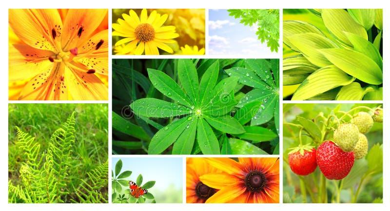 夏天花、绿色叶子和蝴蝶 免版税库存图片