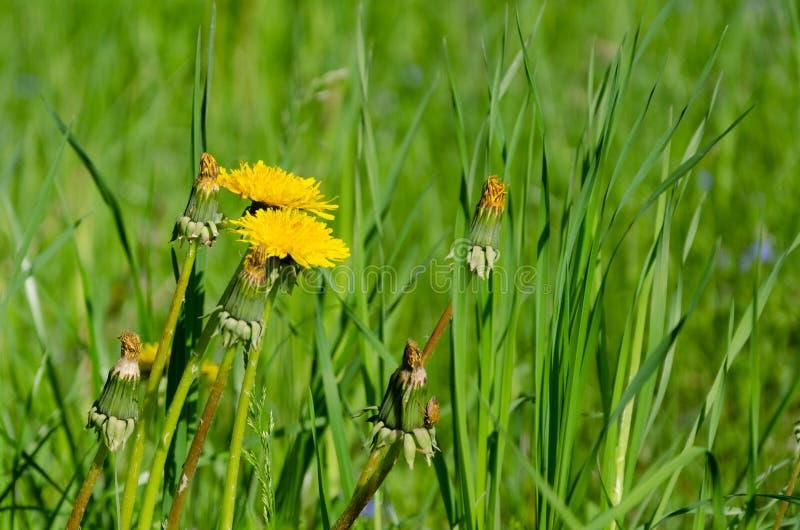 夏天草甸、花和绿草 免版税库存照片