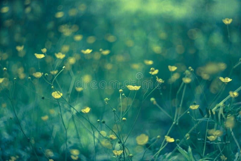 夏天草甸,作黄色 免版税库存图片