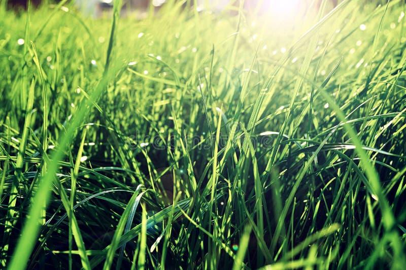 夏天草背景-新鲜的鲜绿色的草特写镜头在发光点燃的草坪的光束 草风景 库存照片