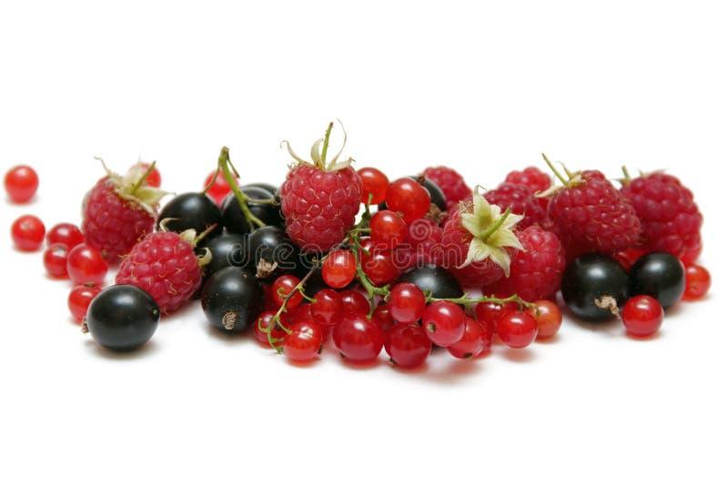夏天莓果 免版税库存照片