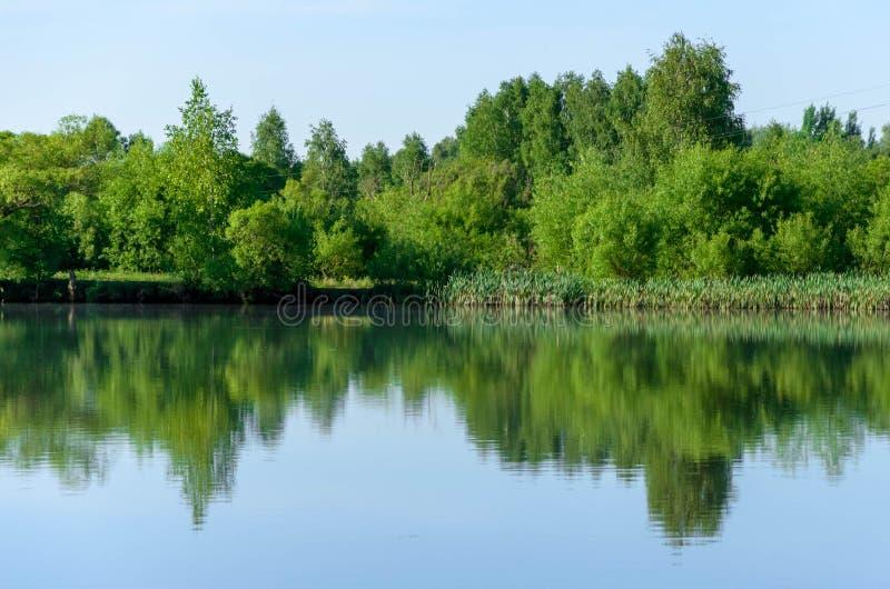 夏天视图的,风景Forest湖 库存照片