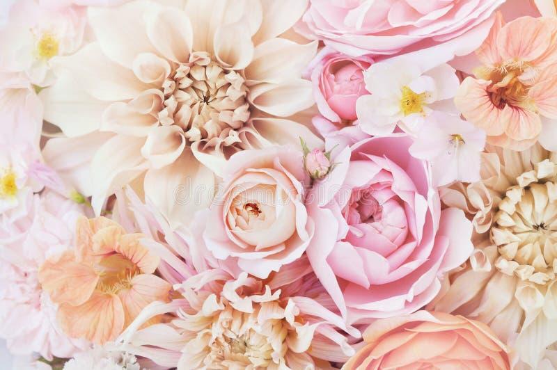 夏天进展的精美玫瑰和大丽花开花的花欢乐背景 库存图片