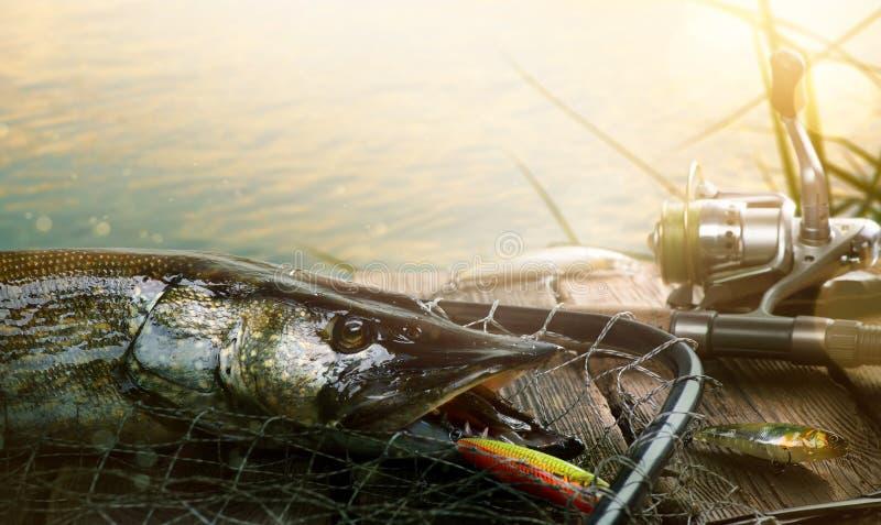 夏天钓鱼背景 钓鱼诱剂和战利品派克 免版税库存图片