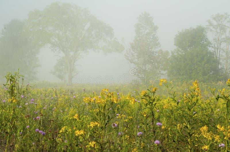 夏天雾和花 免版税库存图片