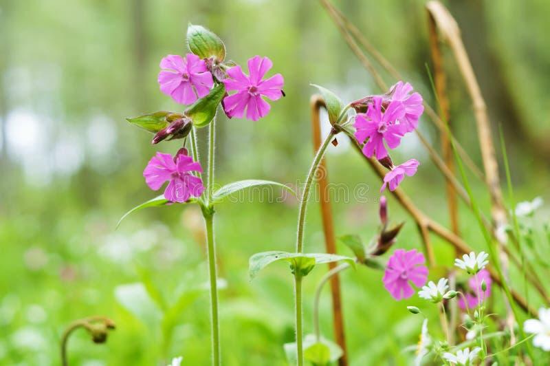 夏天领域淡紫色花,小桃红色花 免版税库存图片
