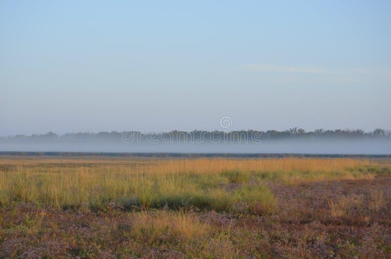 夏天风景和野草 雾在背景中 开始一热的天 干草原 免版税图库摄影