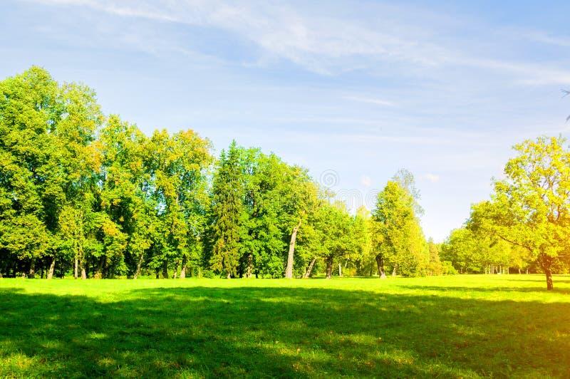 夏天风景在好日子-生长在公园的林木 免版税库存图片