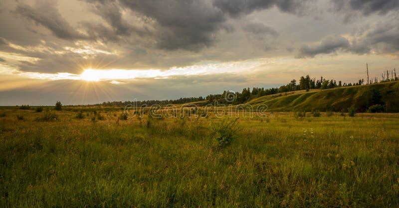 夏天风景日落、草甸、草莓和草在光 自然 免版税库存照片